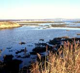 Picture of intertidal habitat in Chichester Harbour